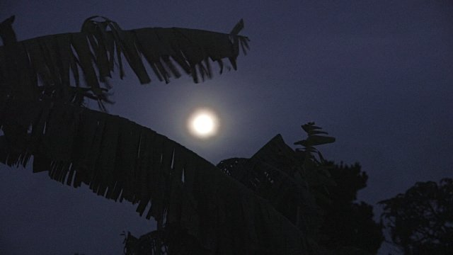 Blog - Bananna Tree & Moon