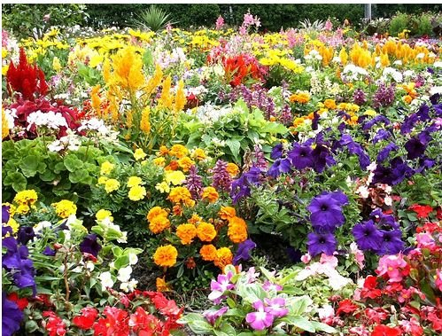 MM - Plant A Seed - Colored Flower Bed