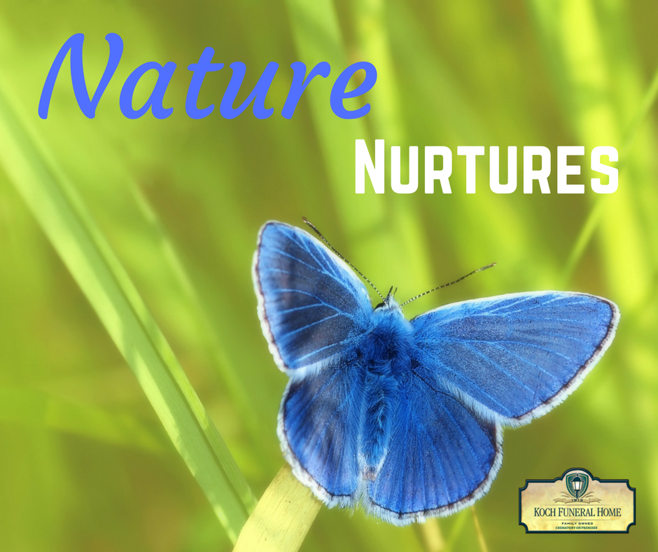 2018 - MM Blog - Nature vs. Nurture